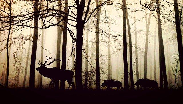 Tieres des Waldes